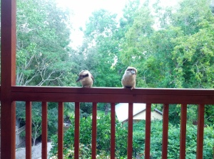 Resident Kookaburra's at my Aunty's house. Photo (c) Megan S, December 2013
