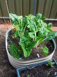 Our veggie garden last year